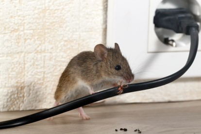 Pest Control in Great Bookham, Little Bookham, KT23. Call Now! 020 8166 9746
