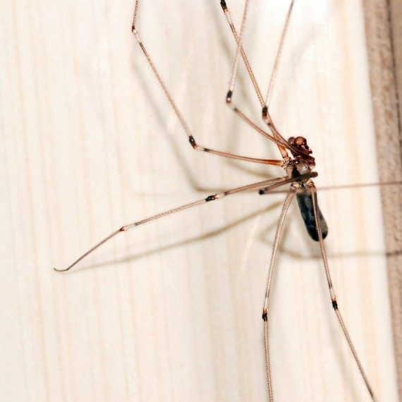 Spiders, Pest Control in Great Bookham, Little Bookham, KT23. Call Now! 020 8166 9746